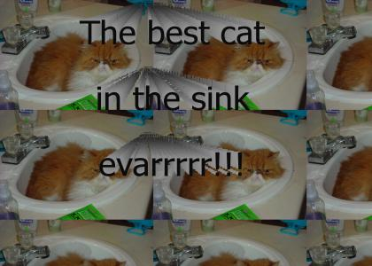 Another cat in the sink