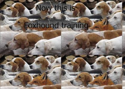 Real Foxhound training, Sorry Snake
