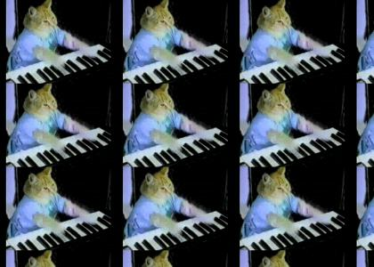 Keyboard Cat Maestro