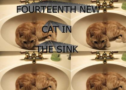 FOURTEENTH NEW CAT IN THE SINK