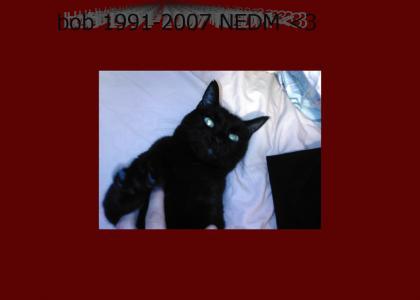 my cat 1991-2007