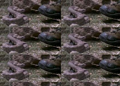 High-Speed Snake Biting Foot
