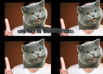 NEDM happy cat says NO to fires