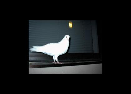 It's just a pigeon