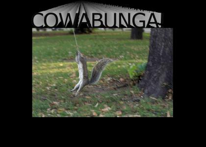 teenage mutant ninja squirrels (no photoshop!)