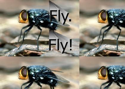 Fly. Fly!