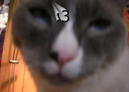 ilovemycats!!!