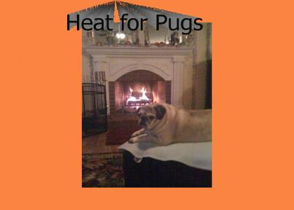 Heat for Pugs
