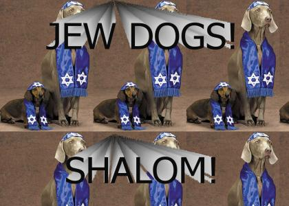 Jew Dogs!