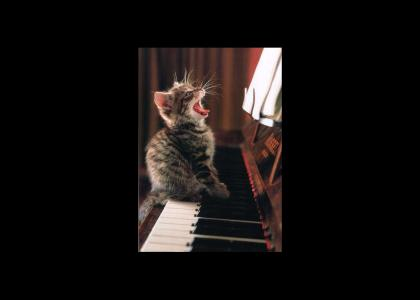 Sing little kitten!