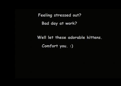 Cute Kittens here to comfort you.
