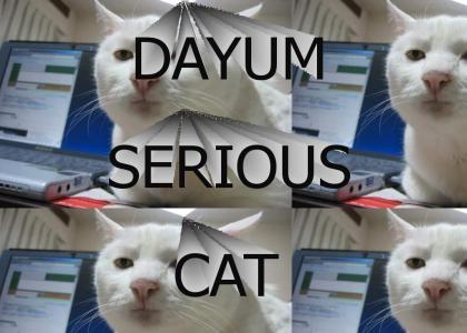 DAYUM, SERIOUS CAT!