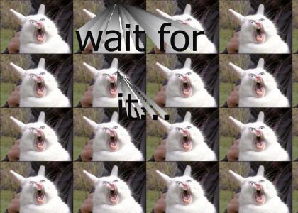 bunny sings opera