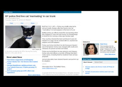 Site about cat abuse with predictable ending