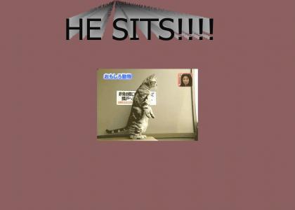 PTKFGS: Chinese sitting cat