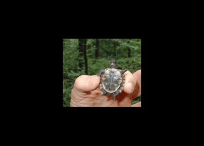 Turtle Phone..