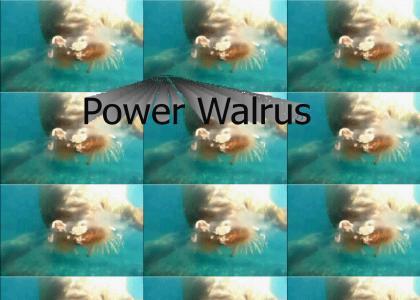Power Walrus