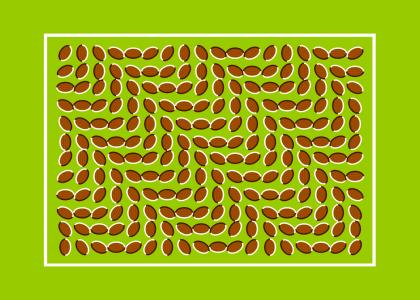 CRAZY ILLUSION *TRIPPY*