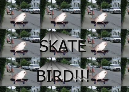 Skate Bird