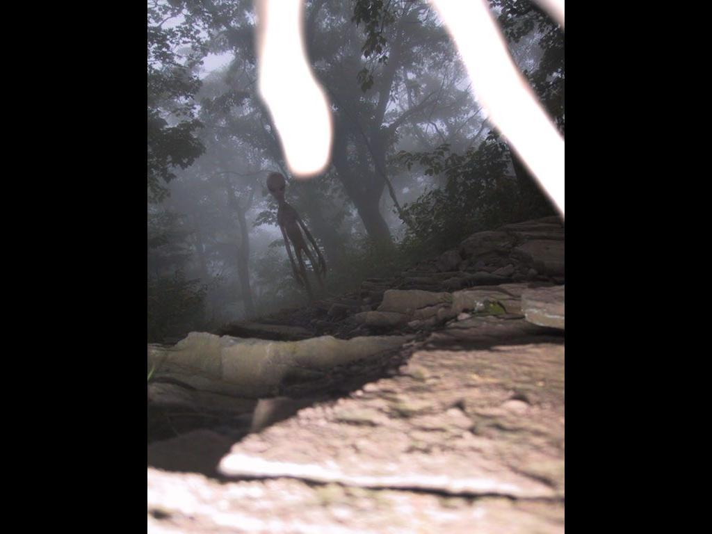 camerainwoodswtf