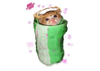 GAYTMND: Burrito Cat