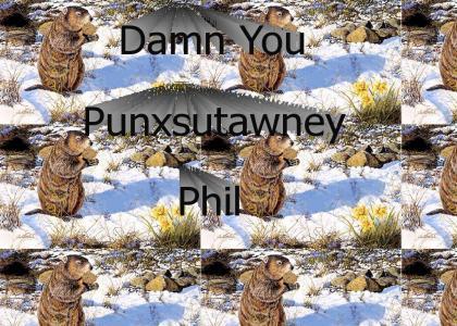 Damn you punxsutawney phil