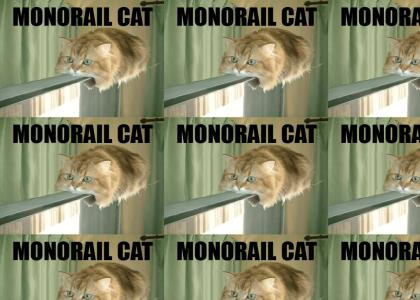 monorail cat on his way
