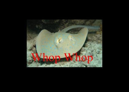 Stingray go Whop Whop