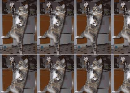 Cat Strobe Dance