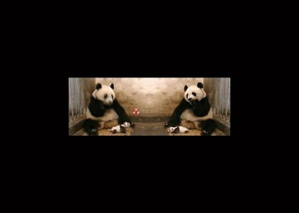 These Pandas, they learn fast