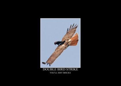 Double Bird Strike
