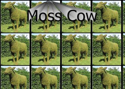 Moss Cow, Moss Cow