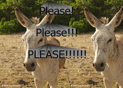 Ride the Donkey