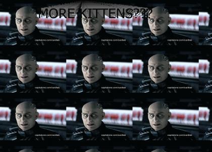 More kittens???