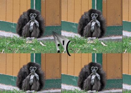 emo gibbon