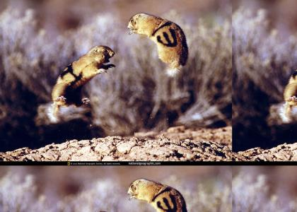 Kung-Fu Gophers (real picture not photoshop)