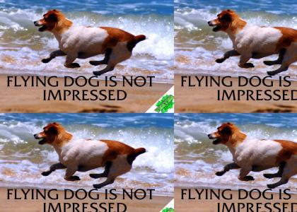 YesYes: Flying dog is not impressed.. V1