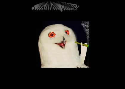 The Orly Owl Is Stoned