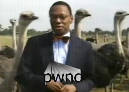 Ostrich Hates Nggrs
