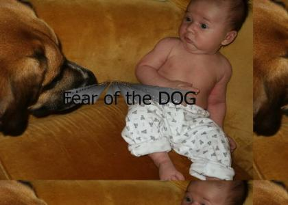 Fear of the dog