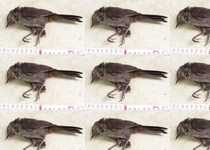 Bird Surgery