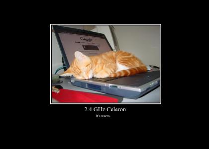 Cat asleep on a laptop.