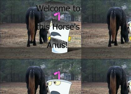Welcome, to this Horse's Anus!