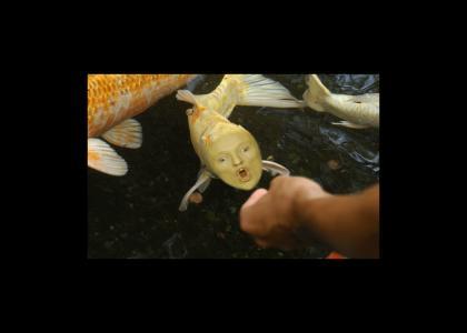 conanfish