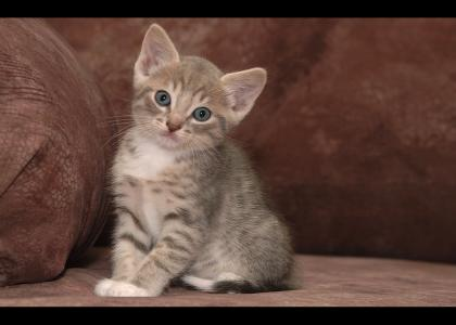 Kitten not only stares into your soul, but questions your very existence.
