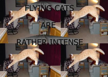 FLYING CATS ARE RATHER INTENSE