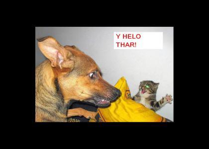 Kitty Y Helo thar