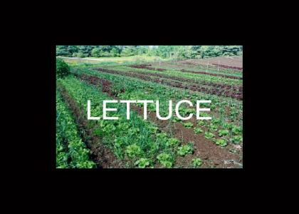 lettuce and tomato field