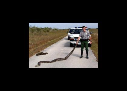 I got a snake man!