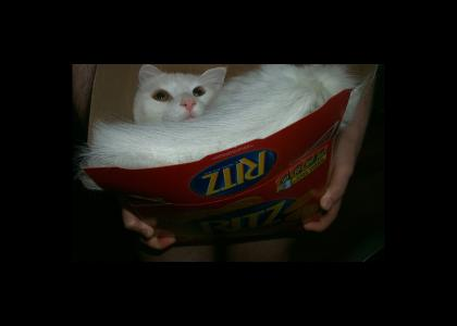 This Cat puts on the Ritz